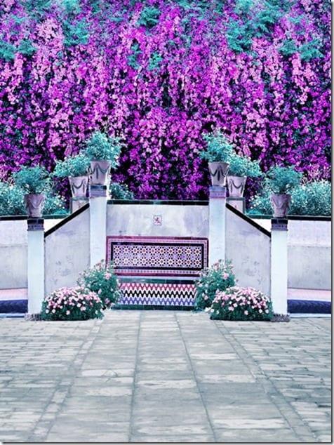Sevilla : Casa de Pilatos : Gardens  - 2/5